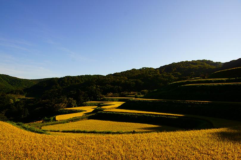 棚田の秋3